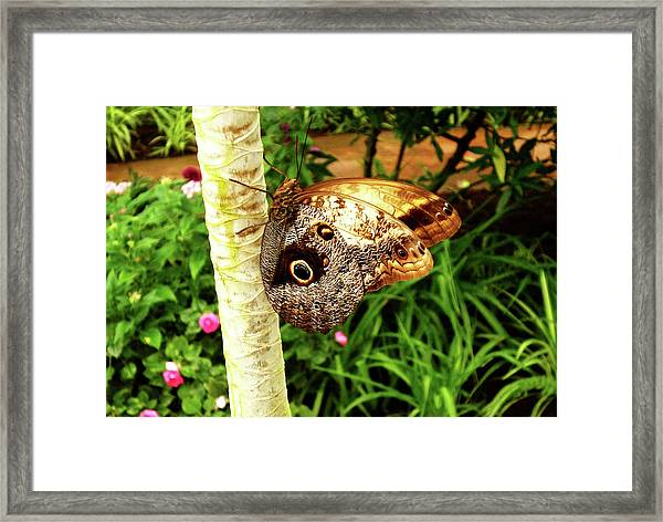Butterfly's Eyes Framed Print