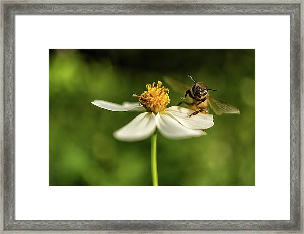 Buzz Off Framed Print
