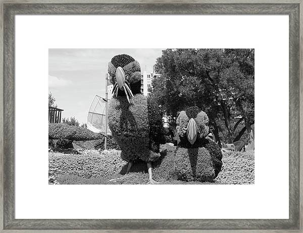 Bw Of Newfoundland And Labrador Entry The Puffins Framed Print