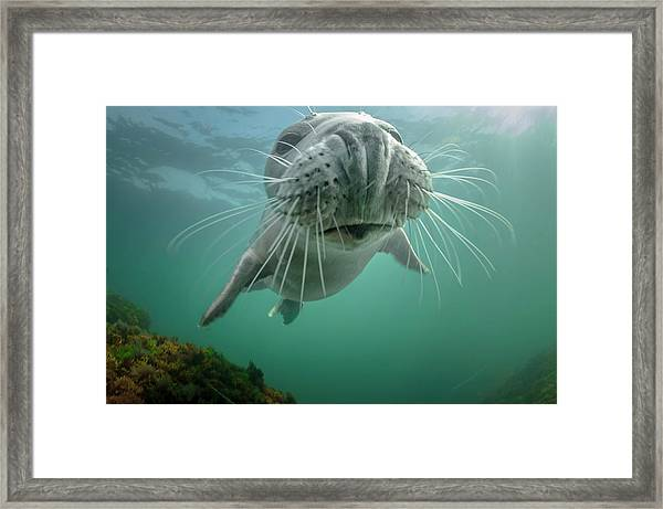 By A Nose Framed Print