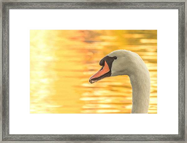 Framed Print featuring the photograph By Dawn's Light by Garvin Hunter