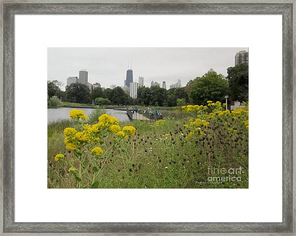 By The Lincoln Park Pond Framed Print