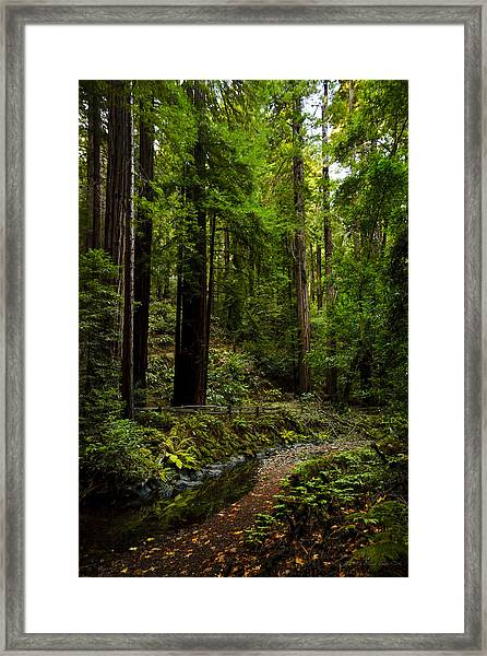 By The Stream In Muir Woods Framed Print