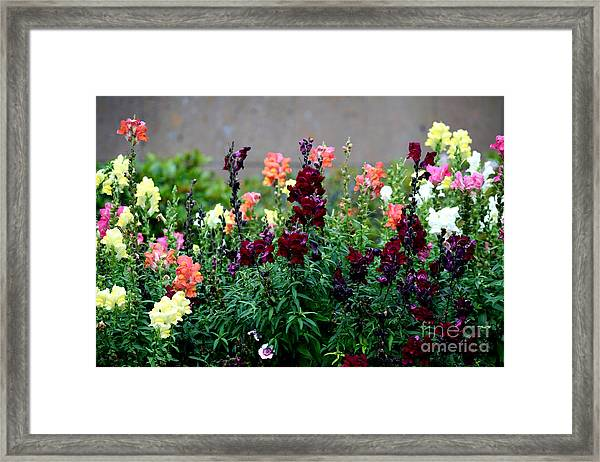Framed Print featuring the painting C231716 by Mas Art Studio