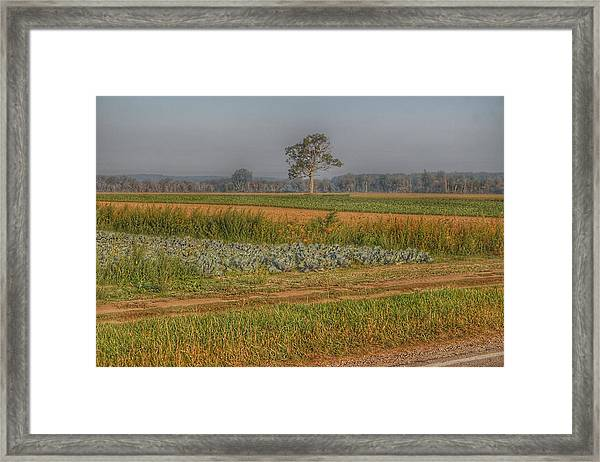 2009 - Cabbage And Pumpkin Patch Framed Print