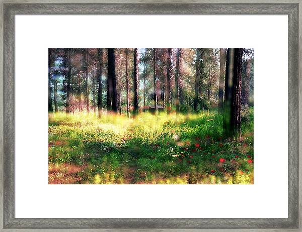 Cabin In The Woods In Menashe Forest Framed Print