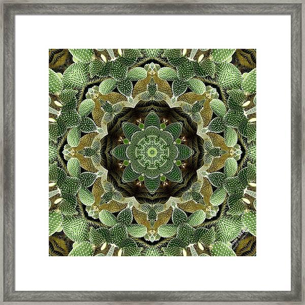 Cactus 1361k8 Framed Print