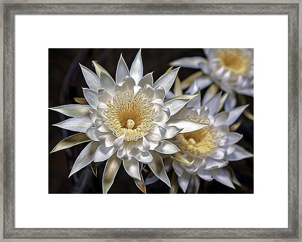 Cactus Art Framed Print