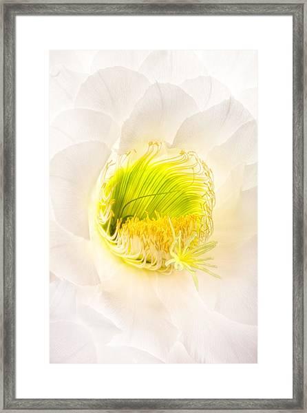 Cactus Bloom Number Five Framed Print