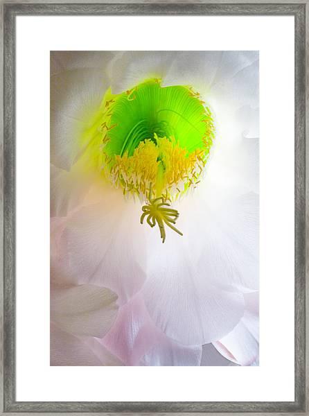 Cactus Bloom Number Six Framed Print
