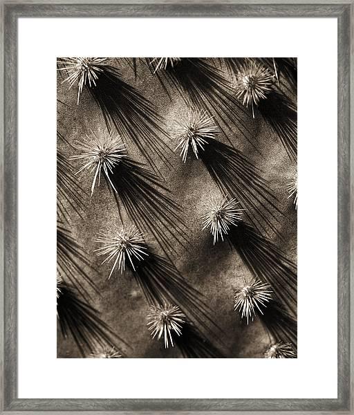 Cactus Shadows Framed Print