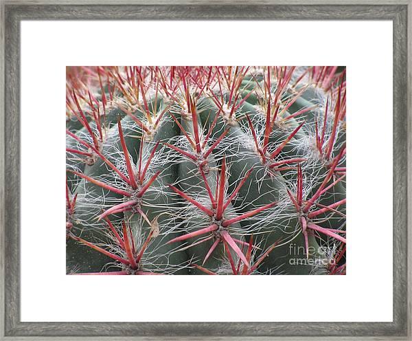 Cactus01 Framed Print