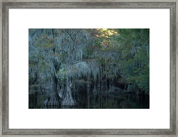 Caddo Lake #2 Framed Print