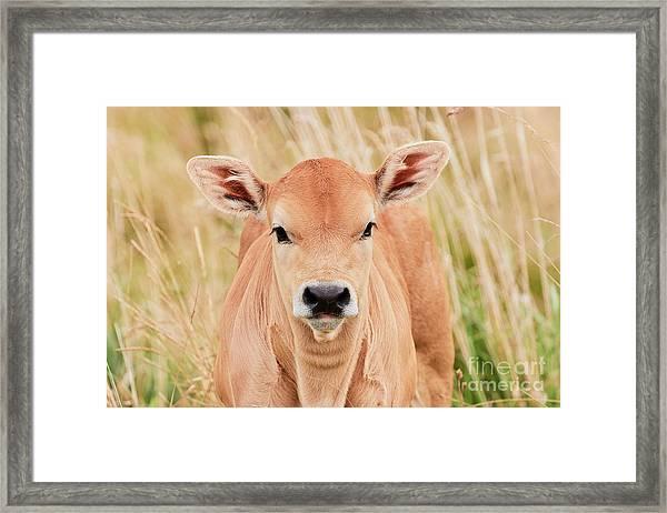 Calf In The High Grass Framed Print