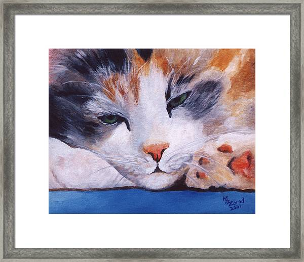 Calico Cat Power Nap Series Framed Print by Mary Jo Zorad