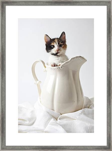 Calico Kitten In White Pitcher Framed Print