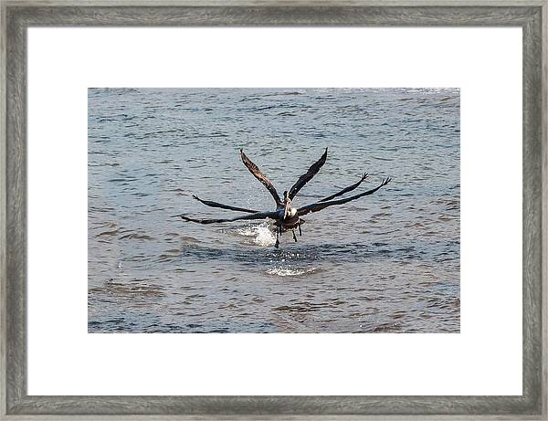 California Brown Pelicans Flying In Tandem Framed Print