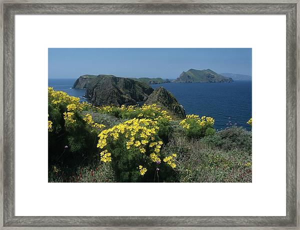 California Island Sunshine Framed Print