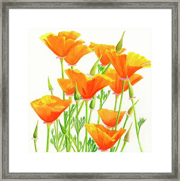 California Poppies Square Design Framed Print
