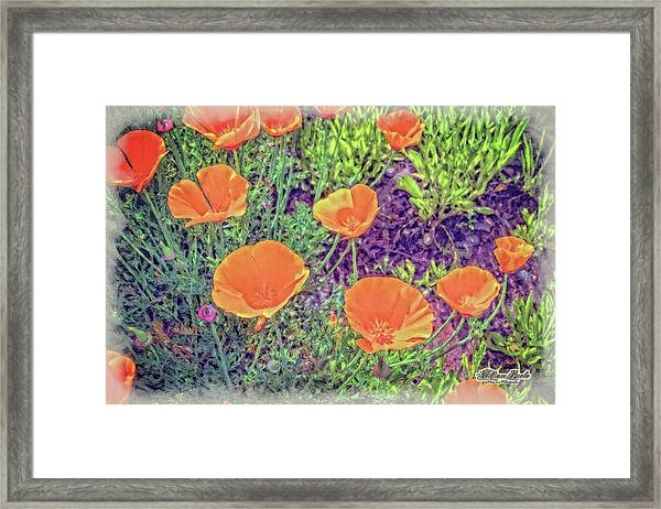 Framed Print featuring the photograph California Poppys Too by William Havle