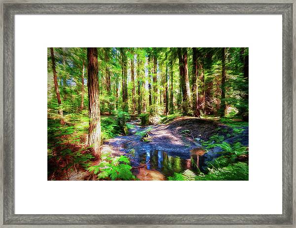 California Redwood Forest Wetlands Ap Framed Print by Dan Carmichael