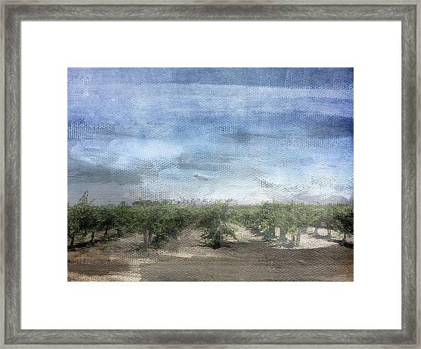 California Vineyard- Art By Linda Woods Framed Print