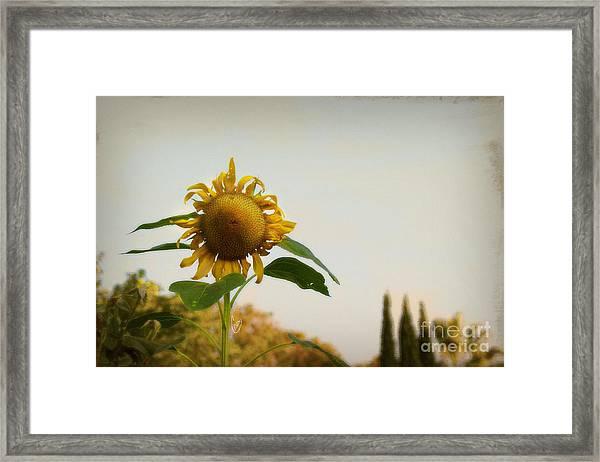 Californian Tuscany Framed Print