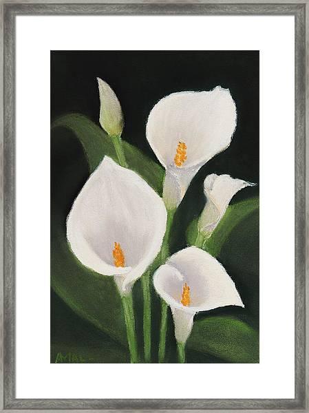 Calla Lilies Framed Print