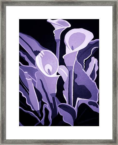 Calla Lillies Lavender Framed Print