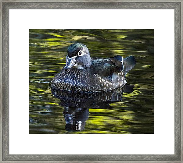 Calmness On The Water Framed Print