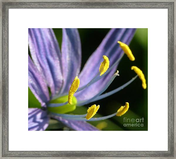 Camas Framed Print