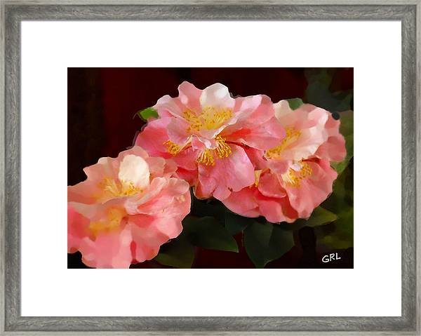 Framed Print featuring the painting Camellias 1cmods1b Digital Painting Gulf Coast Florida by G Linsenmayer