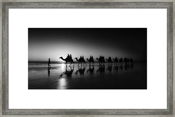 Camels On The Beach Framed Print