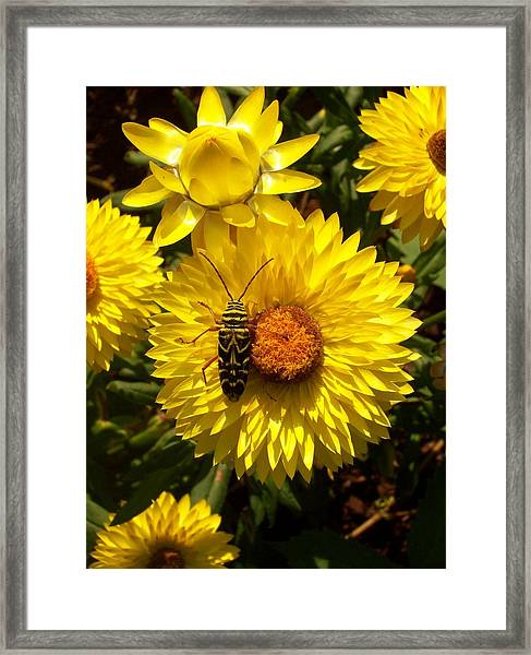 Camouflage Framed Print by Bill Werle