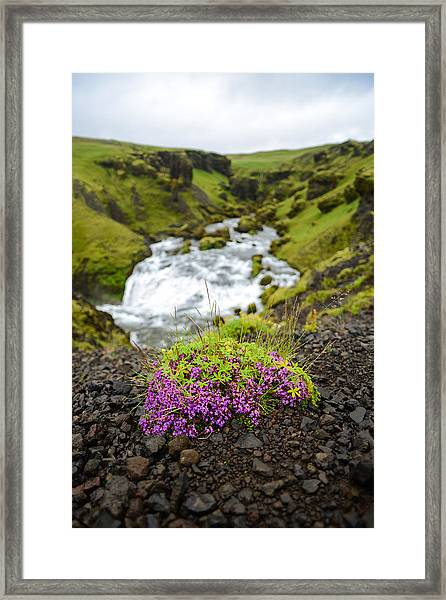 Campion On The Fimmvorduhals Framed Print