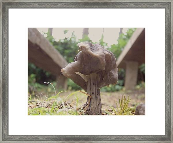 Can-can Dancer Framed Print by Angi Parks