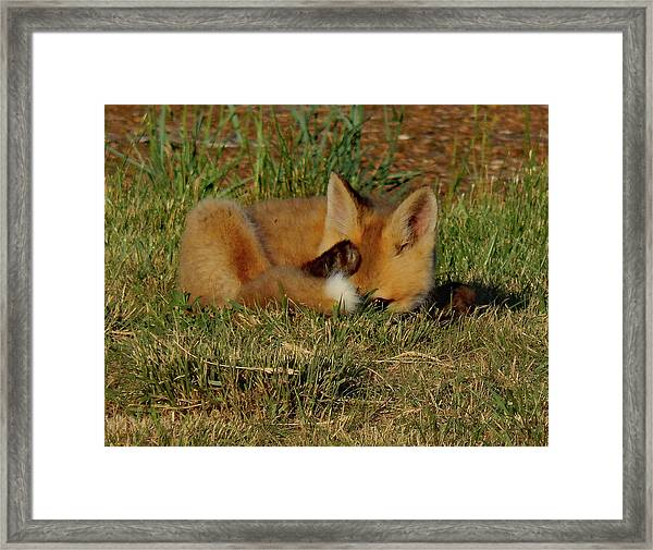 Can You See Me Now Framed Print