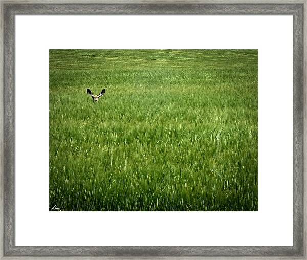 Can You See Me Framed Print
