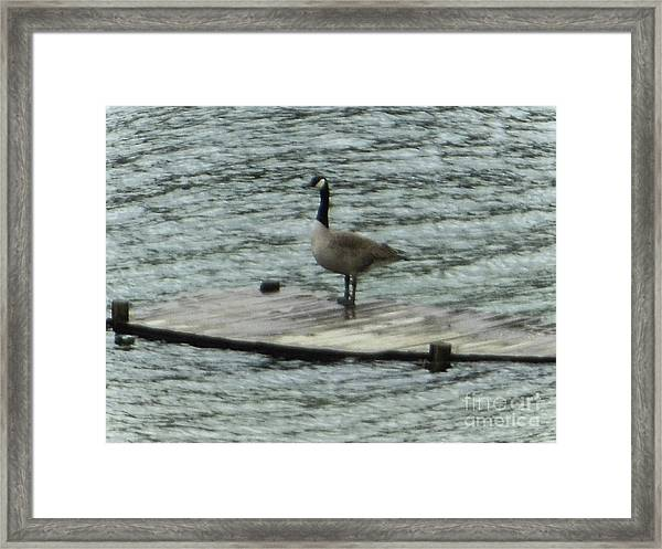 Canada Goose Lake Dock Framed Print