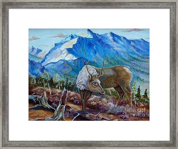 Canadian Caribou Framed Print