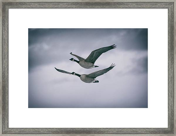Framed Print featuring the photograph Canadian Geese In Flight by Jason Coward