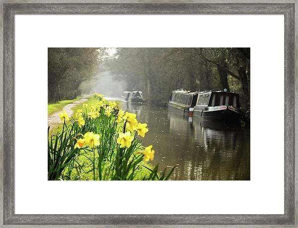 Canalside Daffodils Framed Print