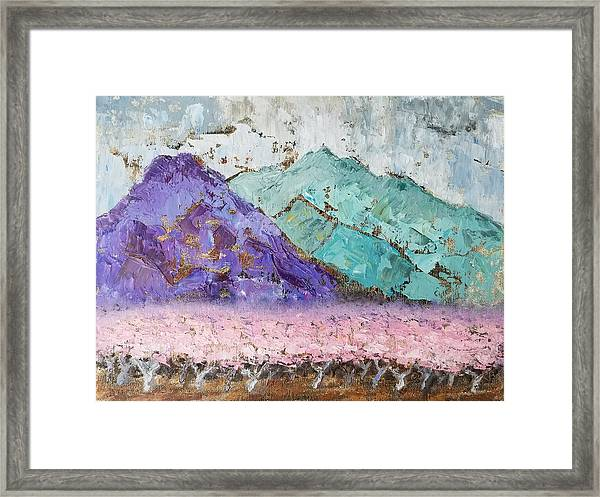Canigou With Blooming Peach Trees Framed Print