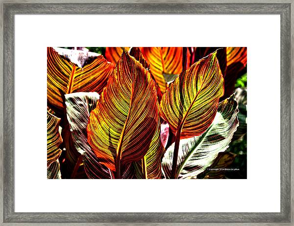Framed Print featuring the photograph Canna 26106hdr by Brian Gryphon