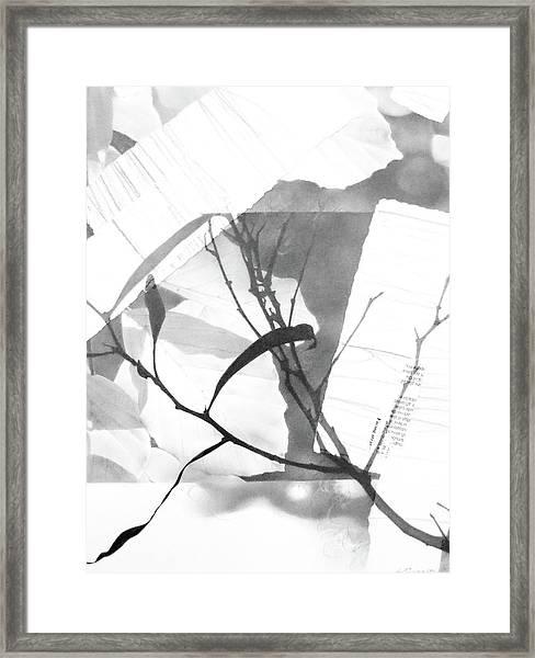 Canopy No. 2 Framed Print