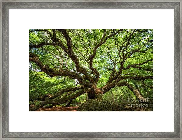 Canopy Of Color At Angel Oak Tree  Framed Print