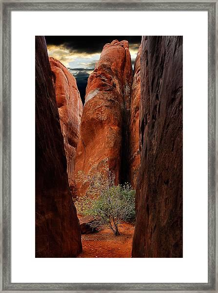 Canyon Tree Framed Print