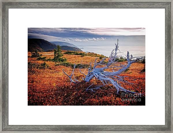 Cape Breton Highlands Framed Print