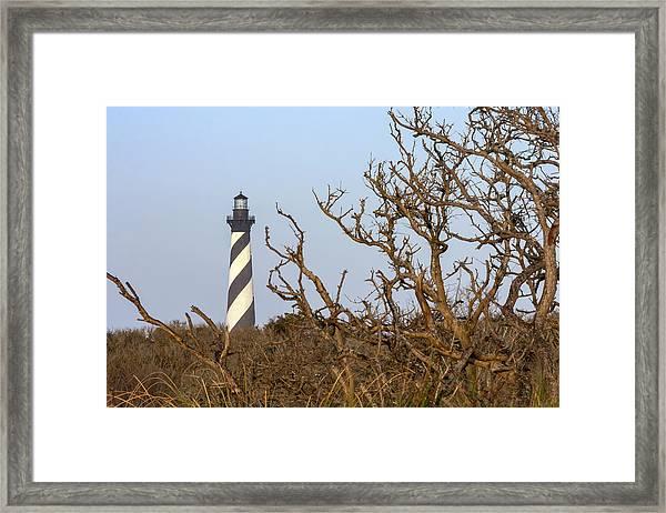 Cape Hatteras Lighthouse Through The Brush Framed Print