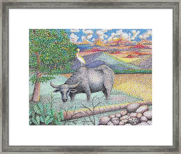 Carabao Framed Print